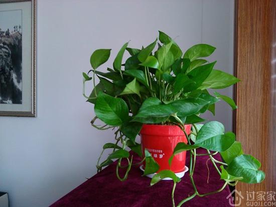 家居摆放绿色植物技巧 客厅餐厅摆放什么植物好