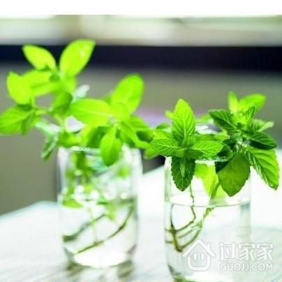 卫生间风水 巧用植物轻松改善