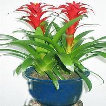家居花卉、绿植的选择和摆放