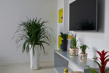 室内的绿化植物如何选择 掌握2点摆放技巧让家蓬荜生辉