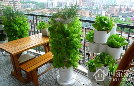 阳台种菜之蔬菜虫害的诊断方法