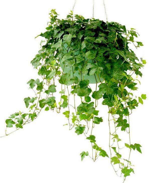 用绿植来营造家居好风水